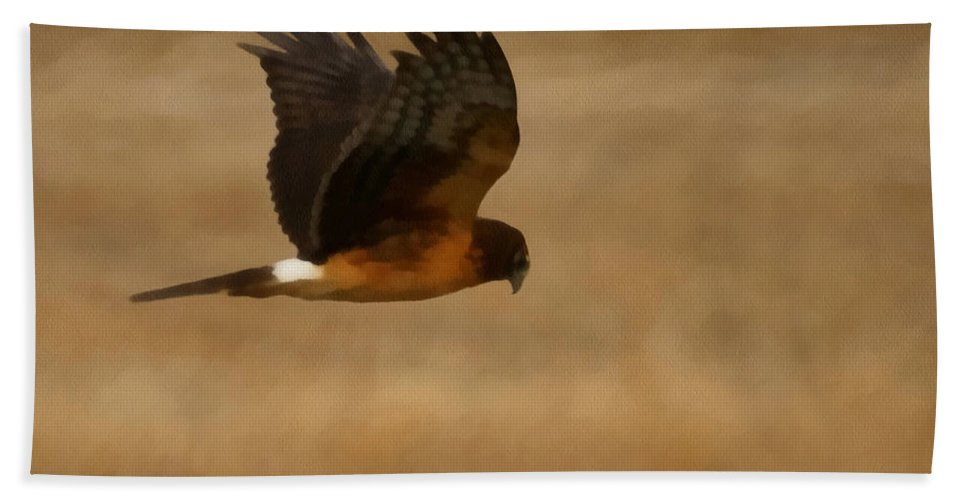 Northern Harrier Hand Towel featuring the digital art Northern Harrier Painterly by Ernie Echols