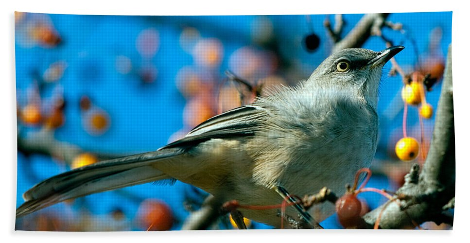 Mockingbird Hand Towel featuring the photograph Northern Mockingbird by Bob Orsillo