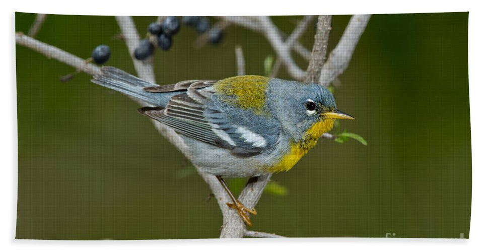 Northern Parula Hand Towel featuring the photograph Northern Parula by Anthony Mercieca