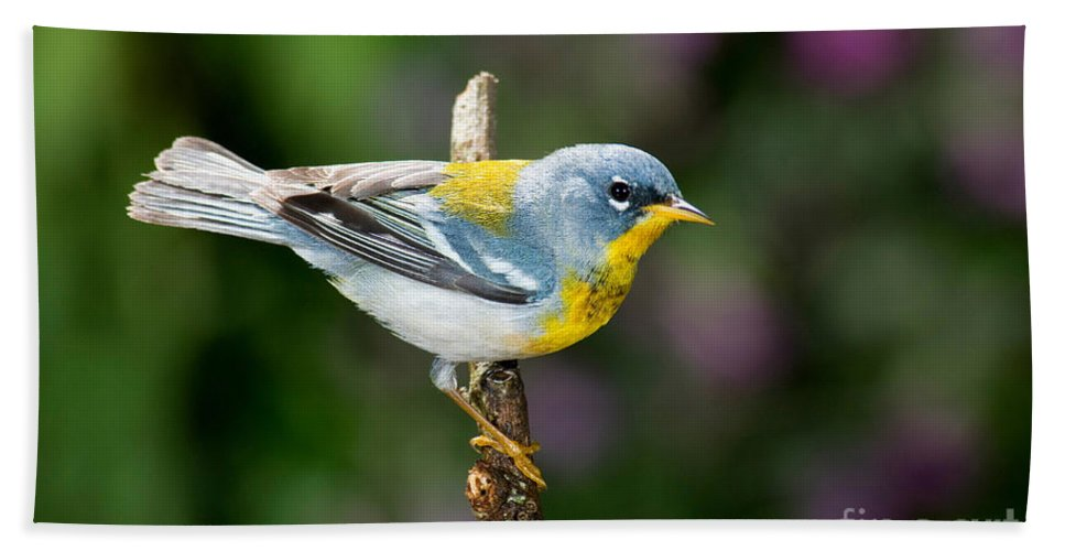Northern Parula Hand Towel featuring the photograph Northern Parula Warbler by Anthony Mercieca