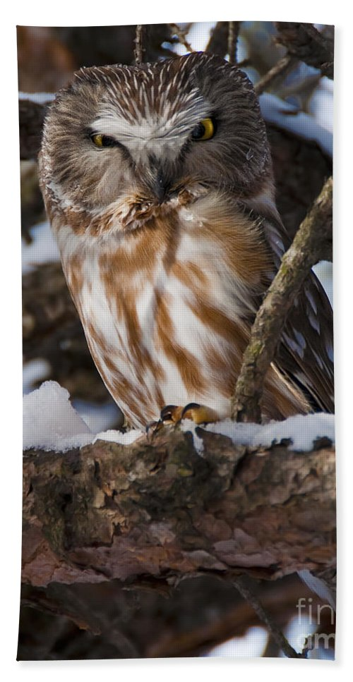 Festblues Hand Towel featuring the photograph Northern Saw-whet Owl.. by Nina Stavlund