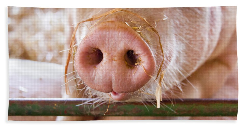 Pig Bath Sheet featuring the photograph Nosey by Caitlyn Grasso