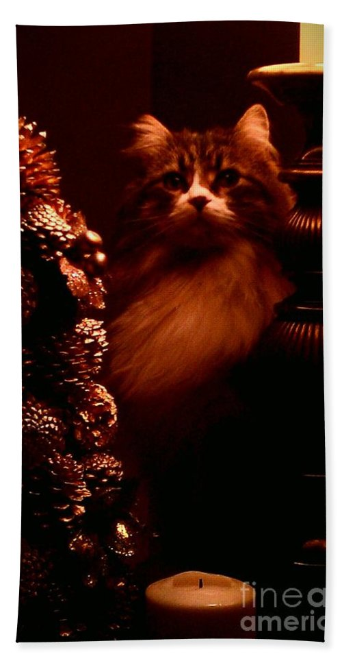 Cat Bath Sheet featuring the photograph Not A Creature Was Stirring... by Jacqueline McReynolds