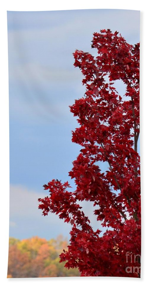 November Red Bath Sheet featuring the photograph November Red by Maria Urso