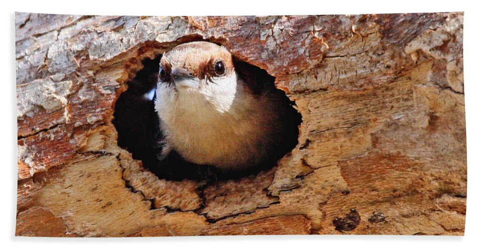Nuthatch Bird Photography Hand Towel featuring the photograph Nuthatch Bird In Nest by Luana K Perez