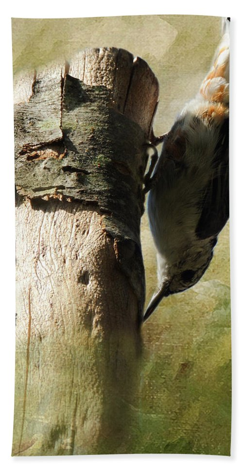 Nuthatch Hand Towel featuring the photograph Nuthatch by Mim White