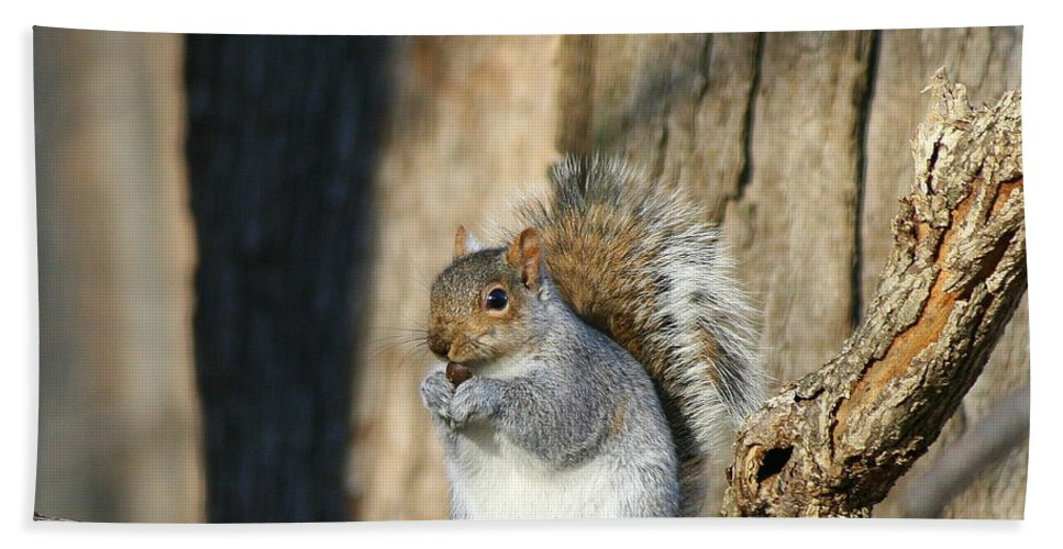 Gray Squirrel Bath Sheet featuring the photograph Nuts by Neal Eslinger