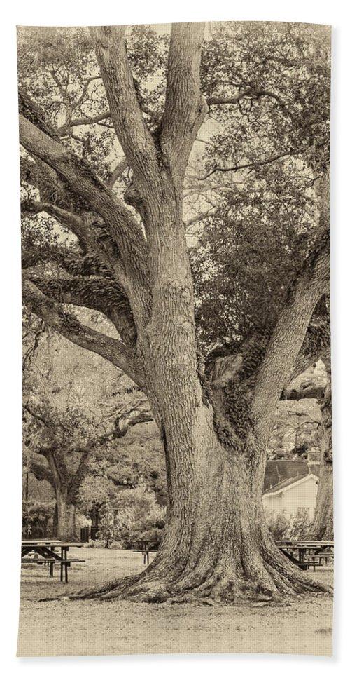 Oak Alley Plantation Hand Towel featuring the photograph Oak Alley Backyard Seoia by Steve Harrington