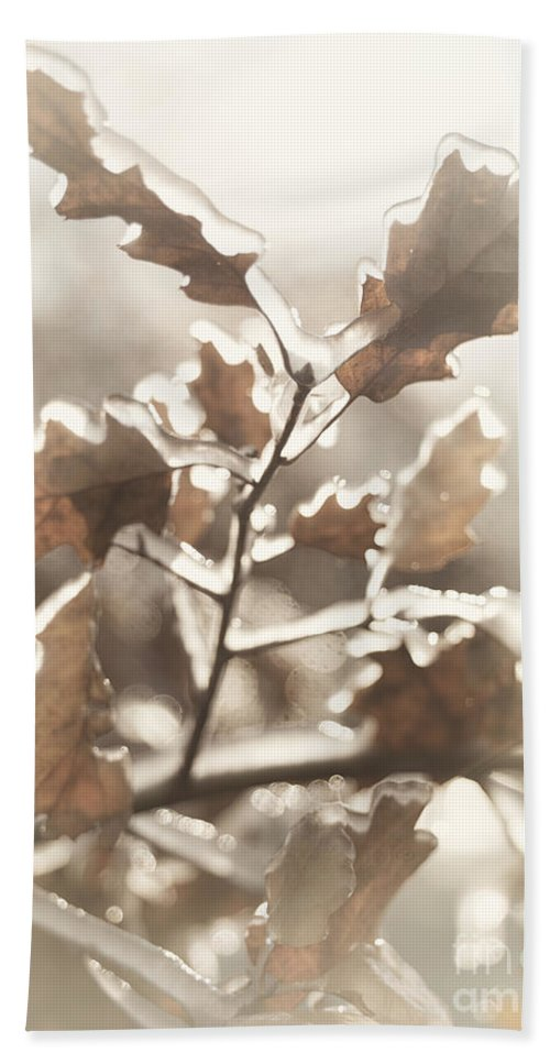 Nature Hand Towel featuring the photograph Oak Tree Leaves Frozen In Ice by Oleksiy Maksymenko