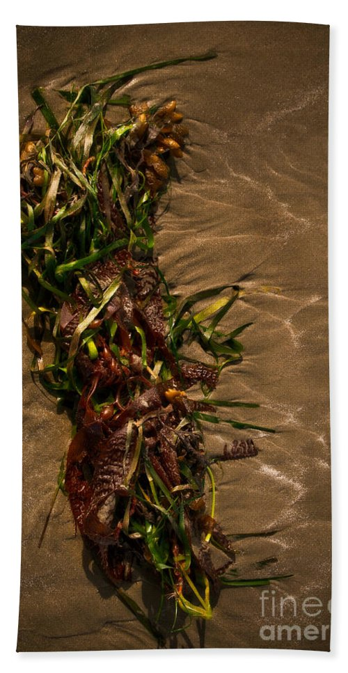 Algae Hand Towel featuring the photograph Ocean Bouquet 4 by Venetta Archer