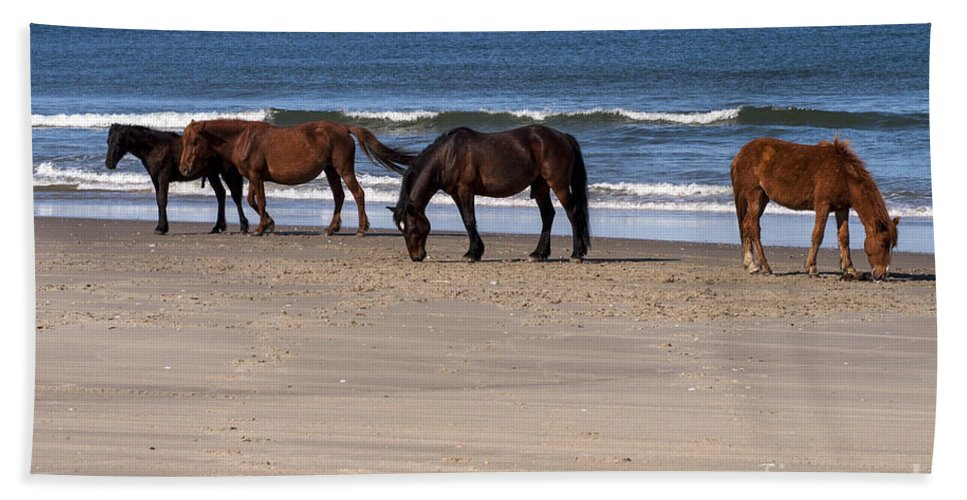 Outer Banks North Carolina Horse Horses Colt Colts Animal Animals Creature Creatures Hand Towel featuring the photograph Odd Man Out by Bob Phillips