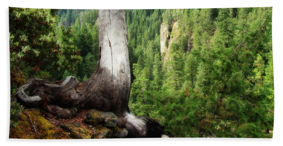 Oregon Hand Towel featuring the photograph Off The Hiking Trail by Katie Wing Vigil
