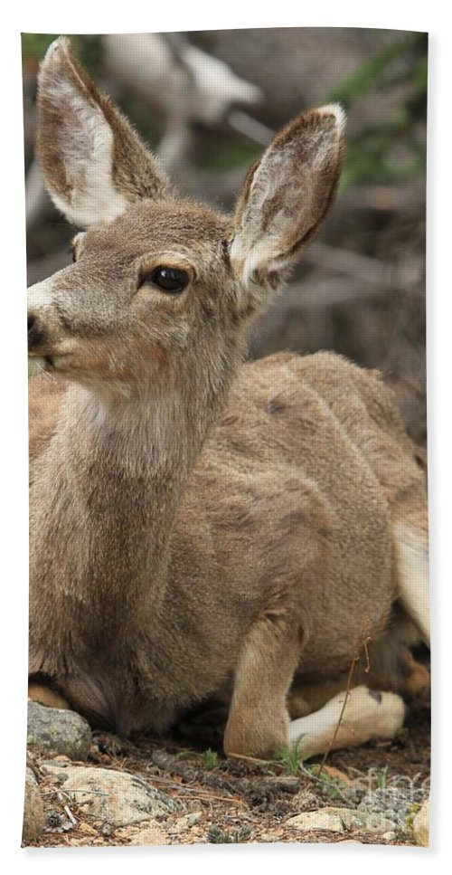 Rocky Mountain National Park Bath Sheet featuring the photograph Oh Deer by Adam Jewell