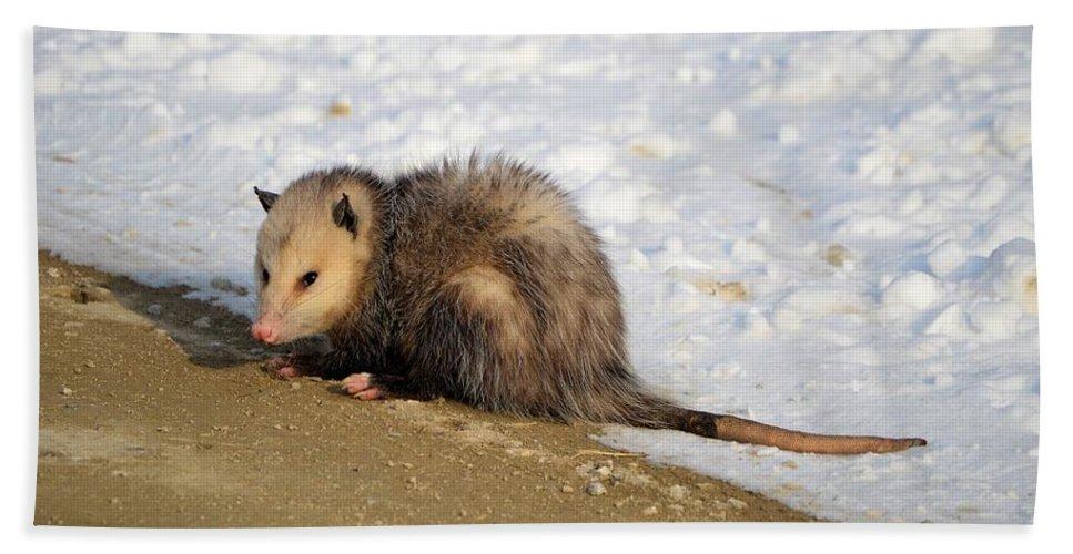 Possum Bath Sheet featuring the photograph Oh Possum by Bonfire Photography