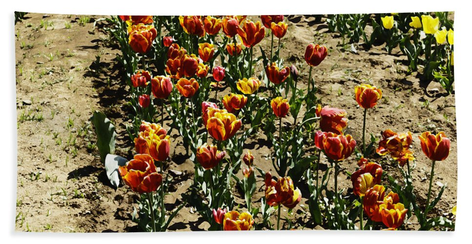 Canon Bath Sheet featuring the digital art Oil Painting - Red And Yellow Tulips Inside The Tulip Garden In Srinagar by Ashish Agarwal