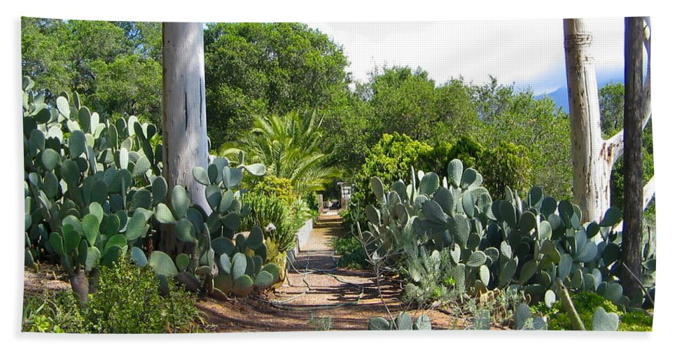 Cactus Bath Sheet featuring the photograph Ojai Desert Garden by Denise Mazzocco
