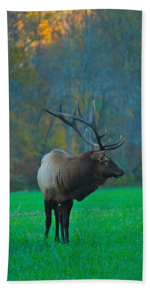 Elk Bath Sheet featuring the photograph Okonoluftee Elk by Nunweiler Photography