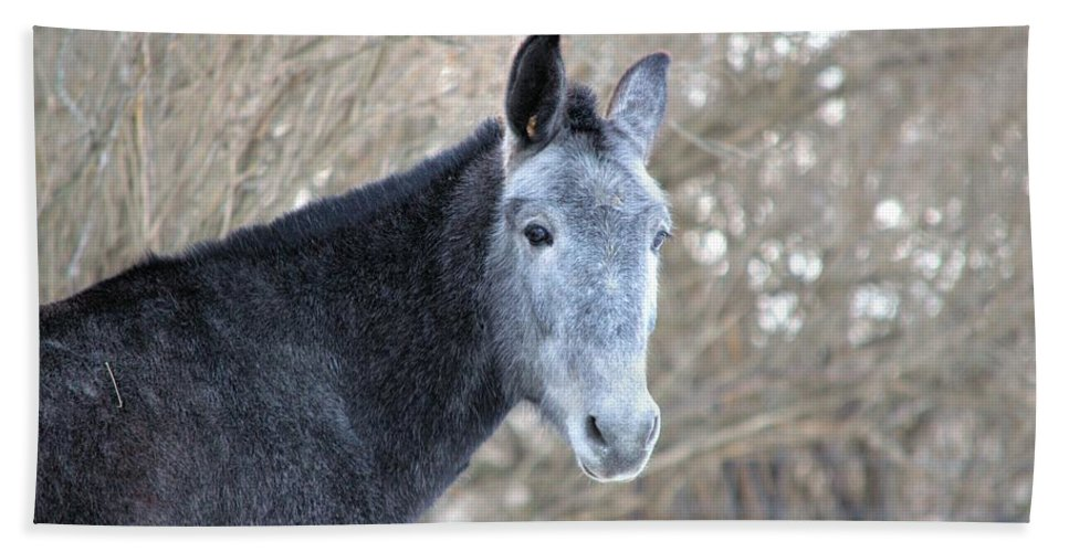 Mule Hand Towel featuring the photograph Old Gray by Bonfire Photography