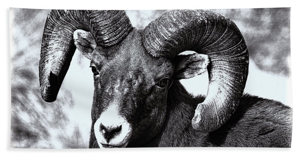 Bighorn Sheep Hand Towel featuring the photograph Old Man On The Mountain by Jim Garrison