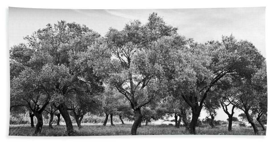 Olive Grove Hand Towel featuring the photograph Olive Grove by Delphimages Photo Creations