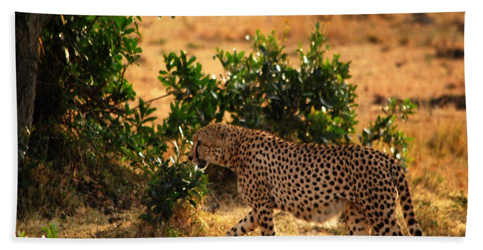 Wildlife Hand Towel featuring the photograph On Patrol by Pamela Peters
