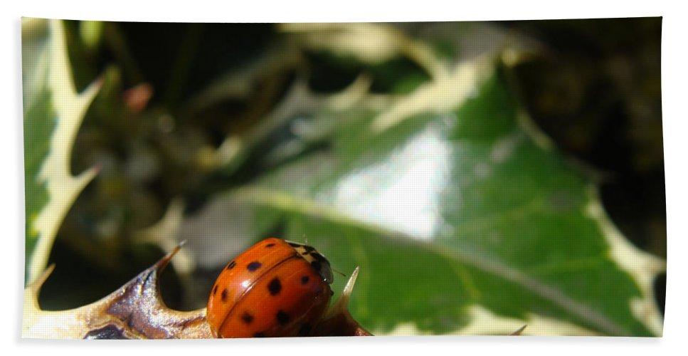 Ladybug Bath Sheet featuring the photograph On The Edge by Cheryl Hoyle