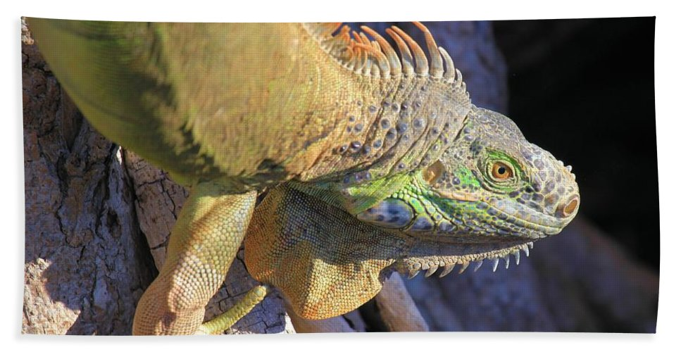 Iguana Bath Sheet featuring the photograph On The Hunt by Adam Jewell