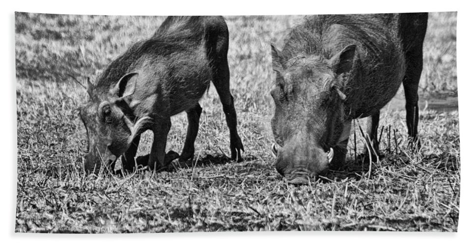 Warthog Bath Sheet featuring the photograph On The Knees by Douglas Barnard