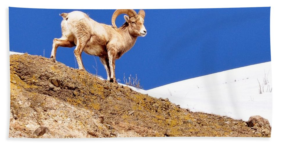 Hoback Junction Hand Towel featuring the photograph On The Mountain by Image Takers Photography LLC - Laura Morgan