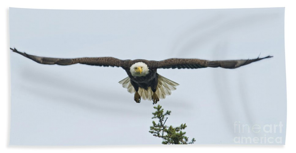 Eagles Hand Towel featuring the photograph On The Move by Claudia Kuhn