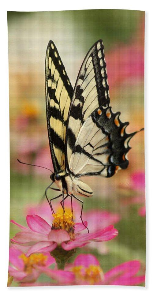 Tiger Swallowtail Butterfly Bath Sheet featuring the photograph On The Top - Swallowtail Butterfly by Kim Hojnacki