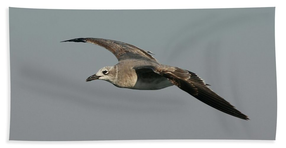 Gull Bath Sheet featuring the photograph On The Way by Christiane Schulze Art And Photography