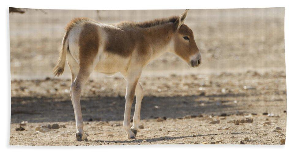 Equus Hemionus Hand Towel featuring the photograph Onager Equus Hemionus by Eyal Bartov