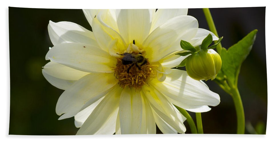 Flower Bath Sheet featuring the photograph One On One by Joe Geraci