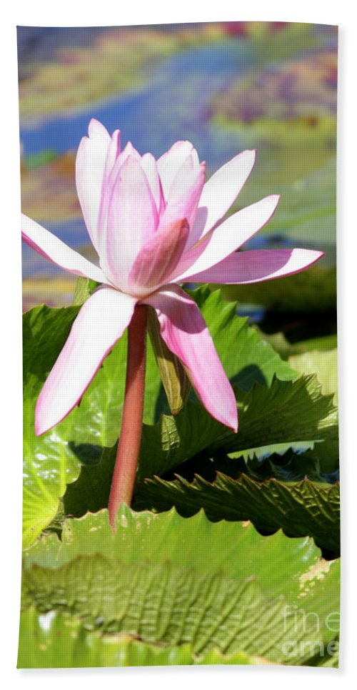 Water Lily Bath Sheet featuring the photograph One Pink Water Lily by Carol Groenen