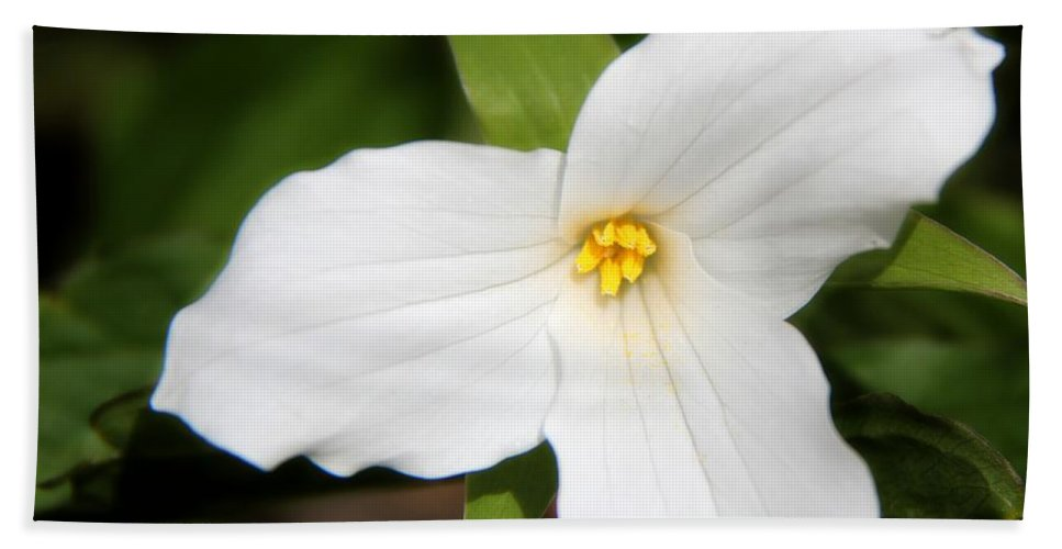 Plants Bath Sheet featuring the photograph Ontario's Trillium Flower by Davandra Cribbie