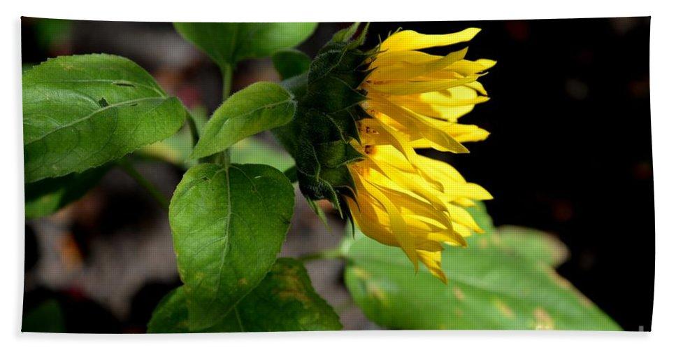 Onward Nature Sunflower Light Bright Garden Photography Art Galina Khlupina Art Hand Towel featuring the photograph Onward by Galina Khlupina