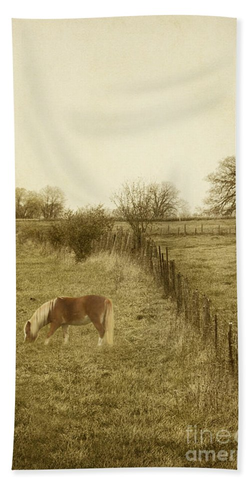 Horse; Mammal; Eating; Grazing; Pony; Field; Grass; Nature; Rural; Farm; Animal; One; Single; Alone; Fence; Fall; Autumn; Weeds; Posts; Trees; Graze; Eat; Farmyard; Country; Countryside; Outside; Outdoors; Nature Hand Towel featuring the photograph Open Fields by Margie Hurwich