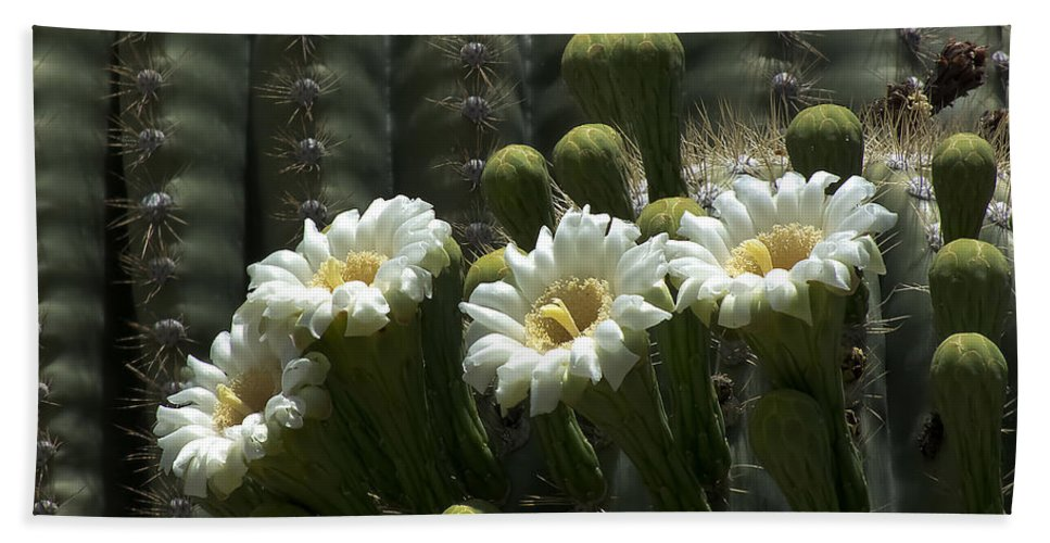 Lucinda Walter Hand Towel featuring the photograph Open To The Sun by Lucinda Walter