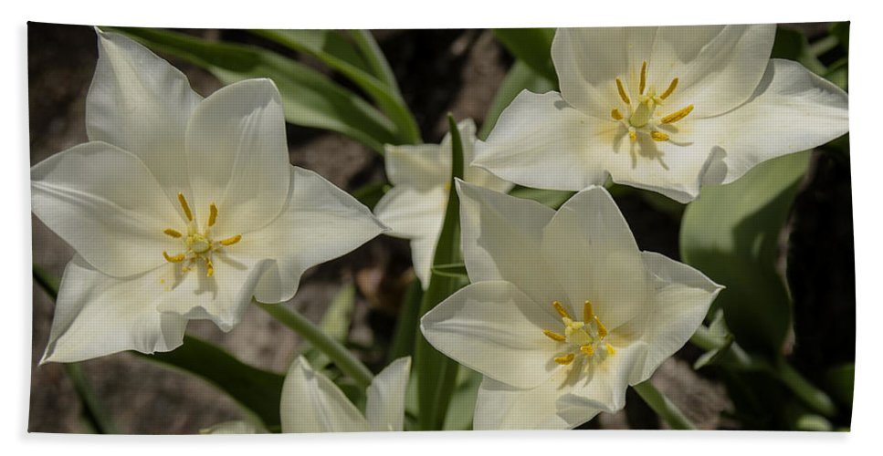 Usa Bath Sheet featuring the photograph Open Tulip Time by LeeAnn McLaneGoetz McLaneGoetzStudioLLCcom