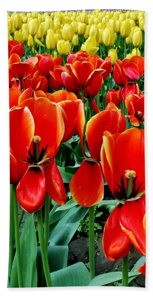 Tulips Hand Towel featuring the photograph Opened by Benjamin Yeager