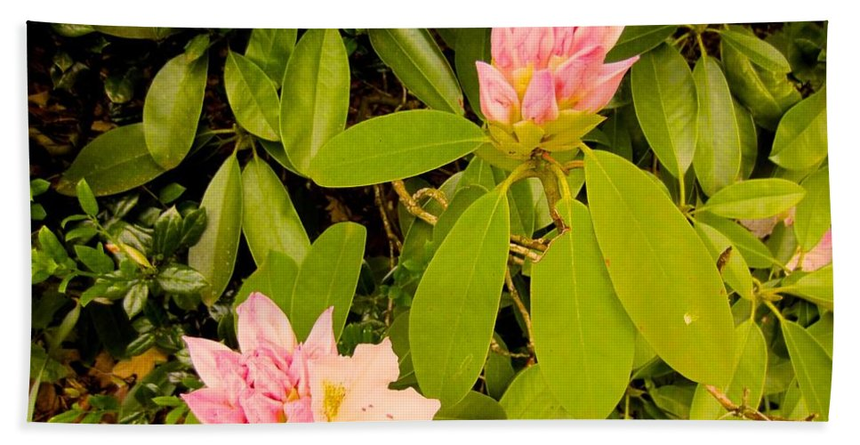 Rhododendron Bath Sheet featuring the photograph Opening Up by Kendall Kessler