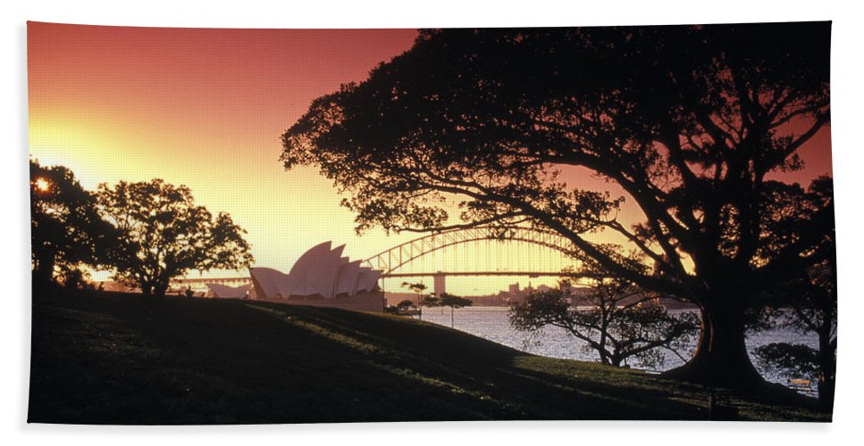 Sydney Australia Hand Towel featuring the photograph Opera Tree by Sean Davey