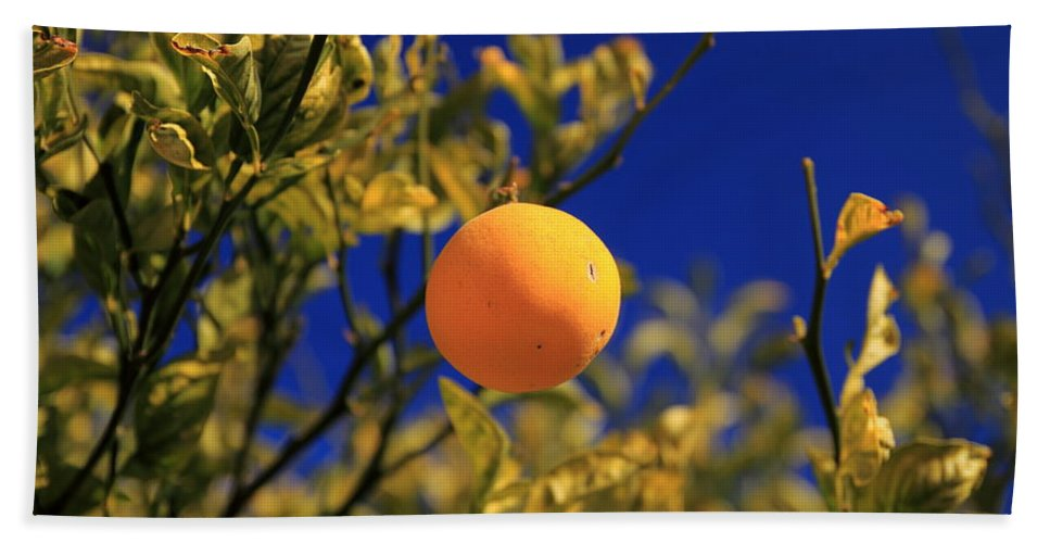 Orange Trees Hand Towel featuring the photograph Orange And Blue Sky by Scott Hill