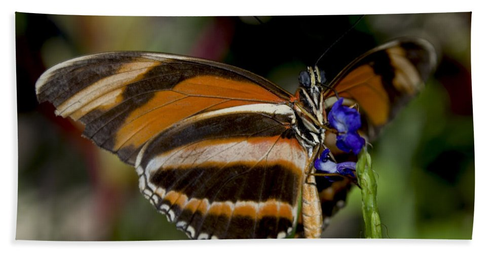 Orange Butterfly Hand Towel featuring the photograph Orange Banded Butterfly by Heather Applegate