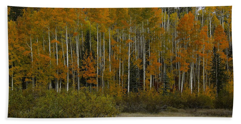 Landscape Hand Towel featuring the photograph Orange Blossom Special by Bill Sherrell