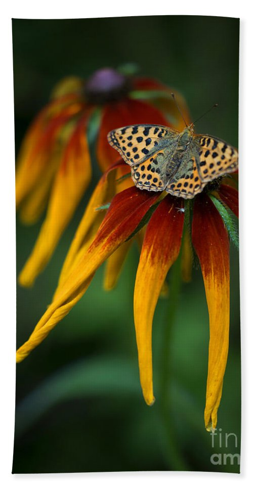 Macro Hand Towel featuring the photograph Orange Butterfly With Black Dots Sitting Onthe Red And Yellow Long Petaled Flowers by Jaroslaw Blaminsky