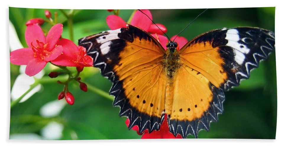Nature Bath Sheet featuring the photograph Orange Common Lacewing Butterfly by Amy McDaniel