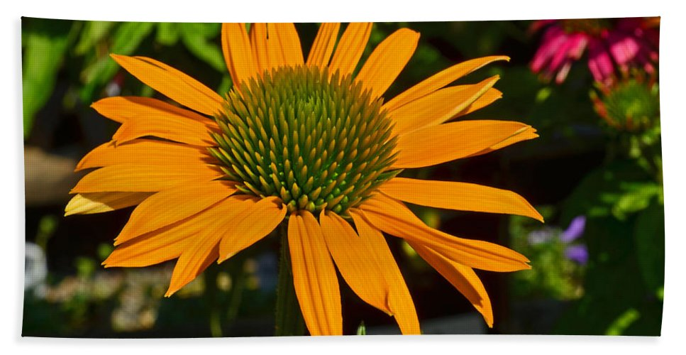 Nature Hand Towel featuring the photograph Orange Cone Flower by Tikvah's Hope
