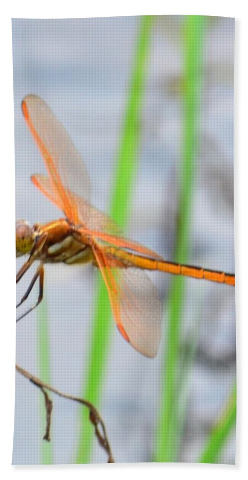 Orange Dragonfly On The Water's Edge Bath Sheet featuring the photograph Orange Dragonfly On The Water's Edge by Maria Urso